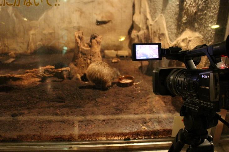 キーウィ 動画 × 天王寺動物園