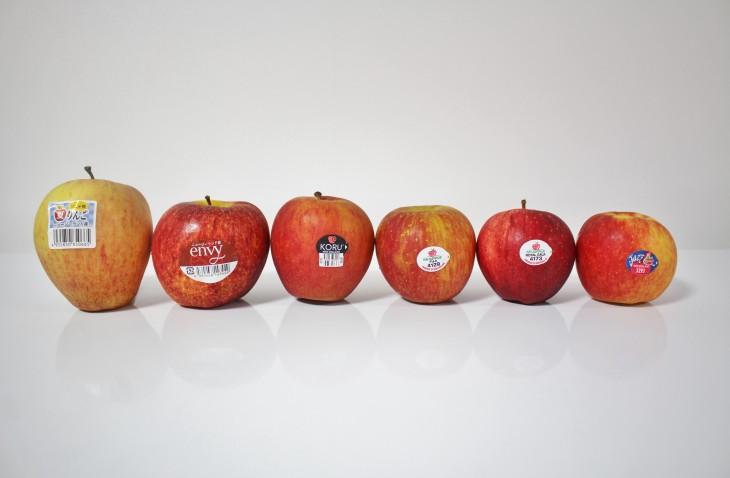 ニュージーランド産 りんご試食会