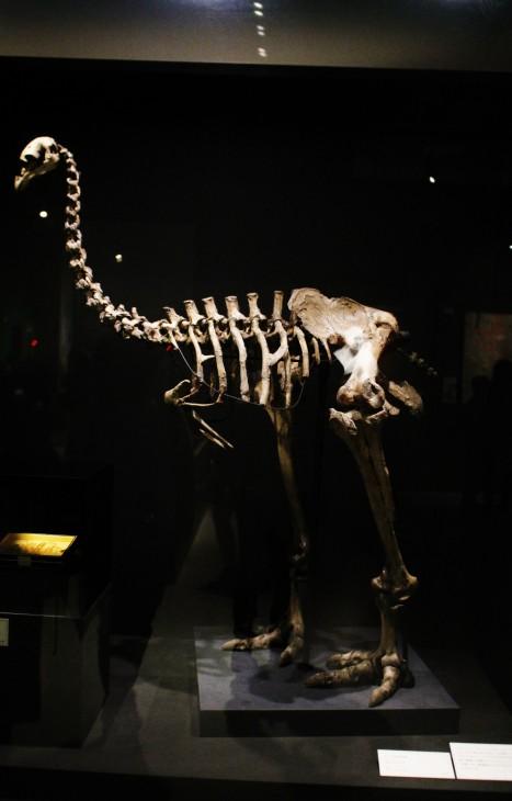 大英自然史博物館展 in 国立科学博物館