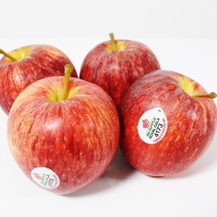 ニュージーランド産りんご 入荷しました!