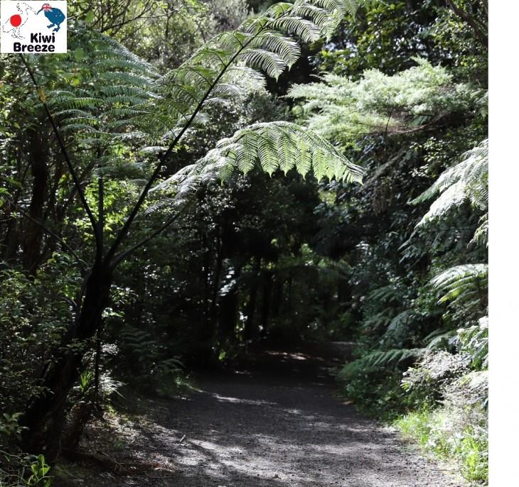 ワイタケレ自然公園のトレッキングコース